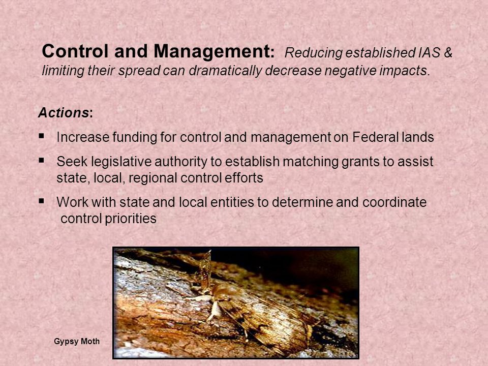 Control and Management : Reducing established IAS & limiting their spread can dramatically decrease negative impacts.