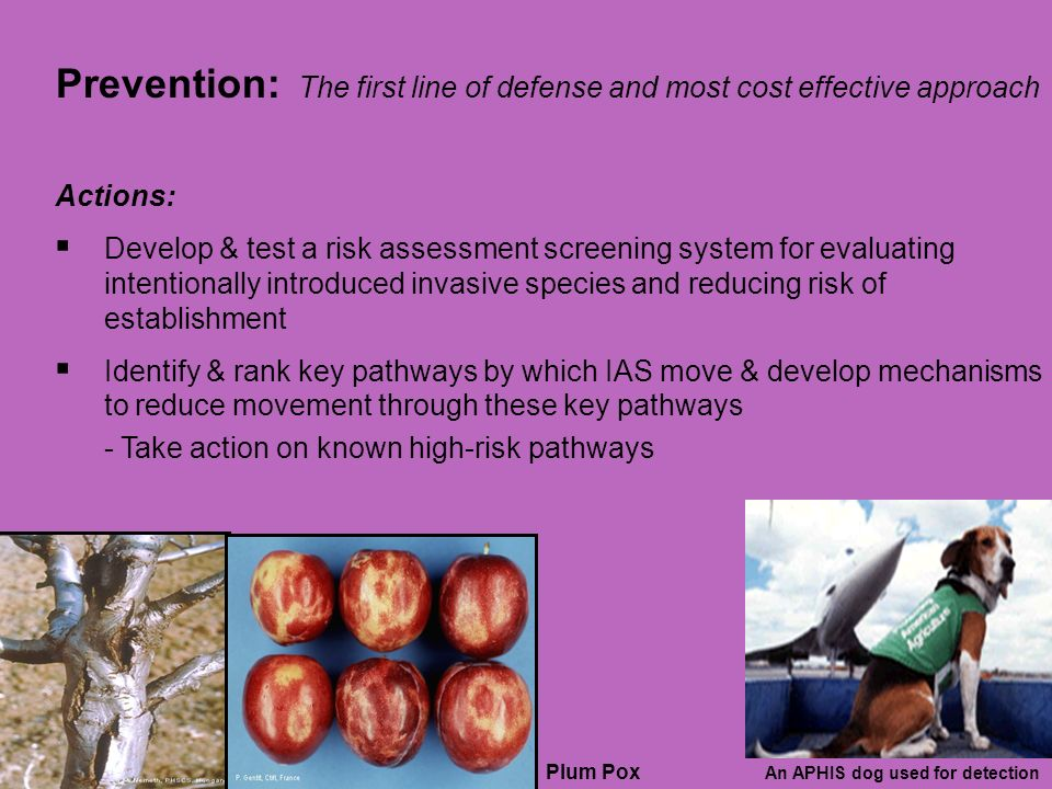 Prevention: The first line of defense and most cost effective approach Actions: Develop & test a risk assessment screening system for evaluating intentionally introduced invasive species and reducing risk of establishment Identify & rank key pathways by which IAS move & develop mechanisms to reduce movement through these key pathways - Take action on known high-risk pathways Plum Pox An APHIS dog used for detection