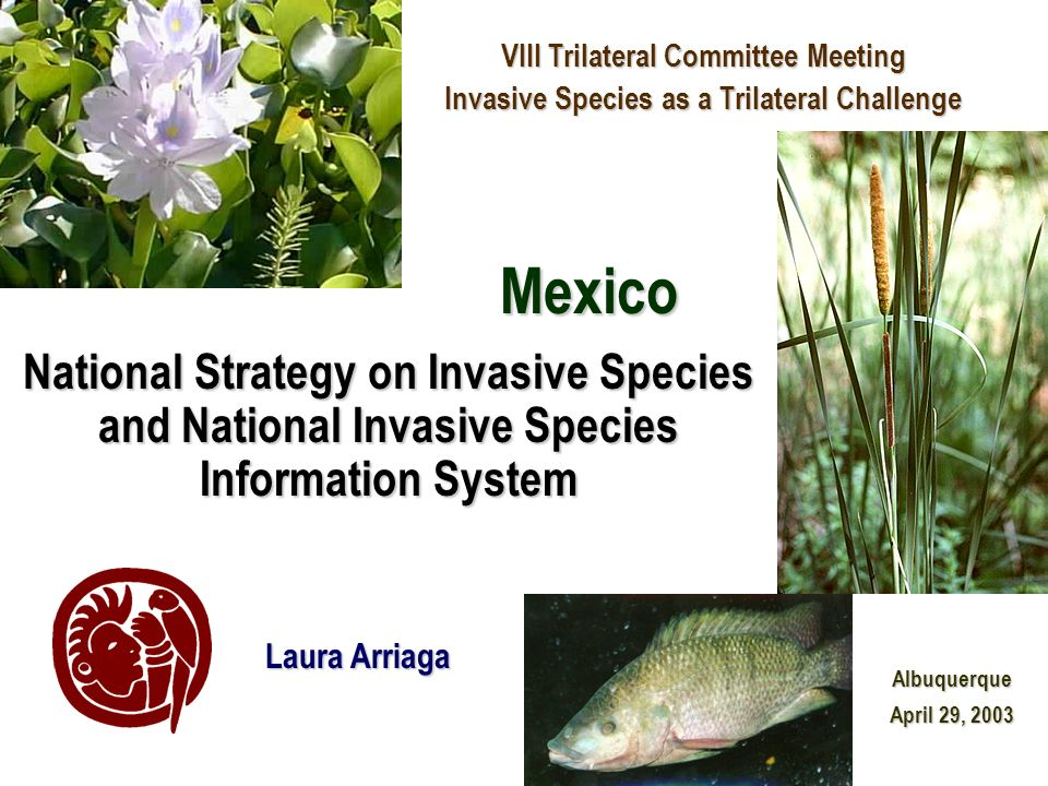 National Strategy on Invasive Species and National Invasive Species Information System VIII Trilateral Committee Meeting Invasive Species as a Trilate