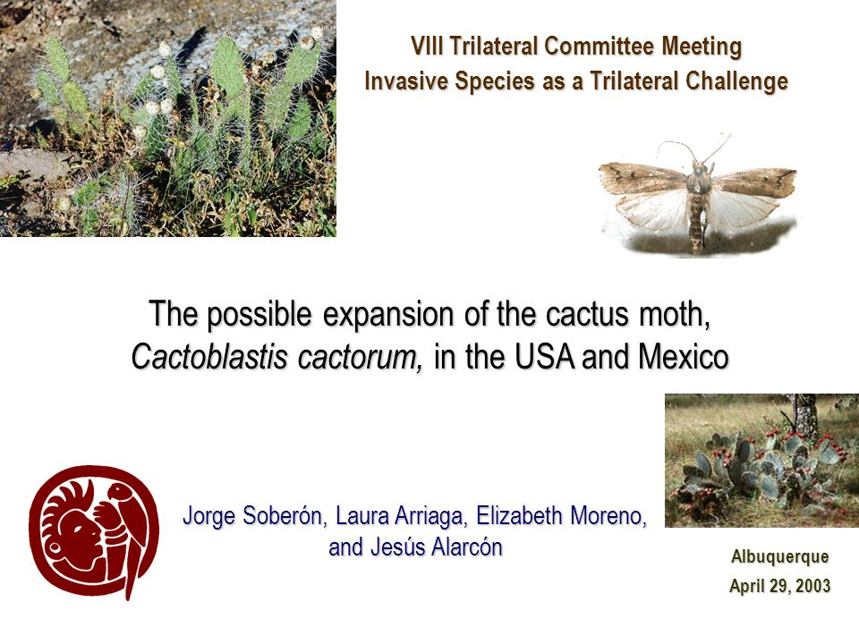 VIII Trilateral Committee Meeting Invasive Species as a Trilateral Challenge Albuquerque April 29, 2003 Jorge Soberón, Laura Arriaga, Elizabeth Moreno, and Jesús Alarcón The possible expansion of the cactus moth, Cactoblastis cactorum, in the USA and Mexico