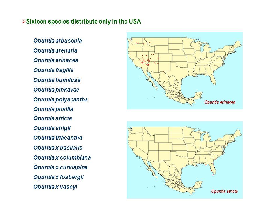 Opuntia basilaris Opuntia californica Opuntia chlorotica Opuntia dillenii Opuntia engelmannii Opuntia littoralis Opuntia macrocentra Opuntia macrorhiza Opuntia microdasys Opuntia oricola Opuntia phaeacantha Opuntia x occidentalis Twelve species are shared between Mexico and the USA Opuntia dillenii Opuntia engelmannii