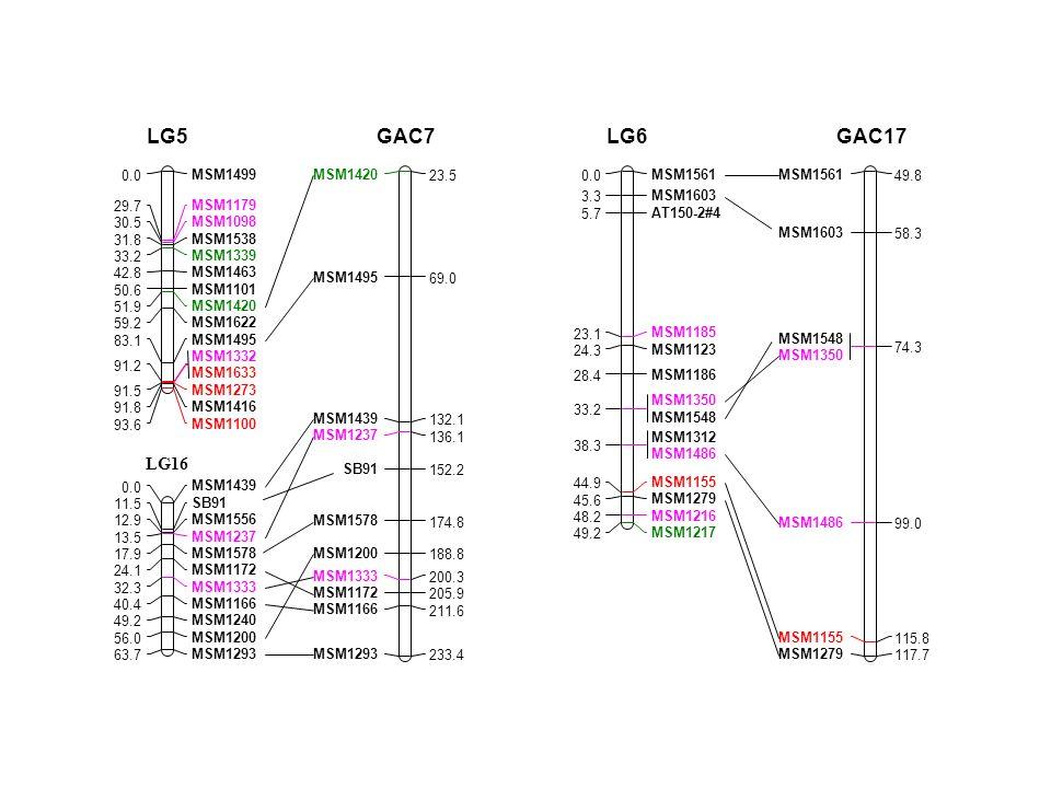 LG16 MSM1420 23.5 MSM1495 69.0 MSM1439 132.1 MSM1237 136.1 SB91 152.2 MSM1578 174.8 MSM1200 188.8 MSM1333 200.3 MSM1172 205.9 MSM1166 211.6 MSM1293 233.4 GAC7 MSM1561 0.0 MSM1603 3.3 AT150-2#4 5.7 MSM1185 23.1 MSM1123 24.3 MSM1186 28.4 MSM1350 MSM1548 33.2 MSM1312 MSM1486 38.3 MSM1155 44.9 MSM1279 45.6 MSM1216 48.2 MSM1217 49.2 LG6 MSM1561 49.8 MSM1603 58.3 MSM1548 MSM1350 74.3 MSM1486 99.0 MSM1155 115.8 MSM1279 117.7 GAC17