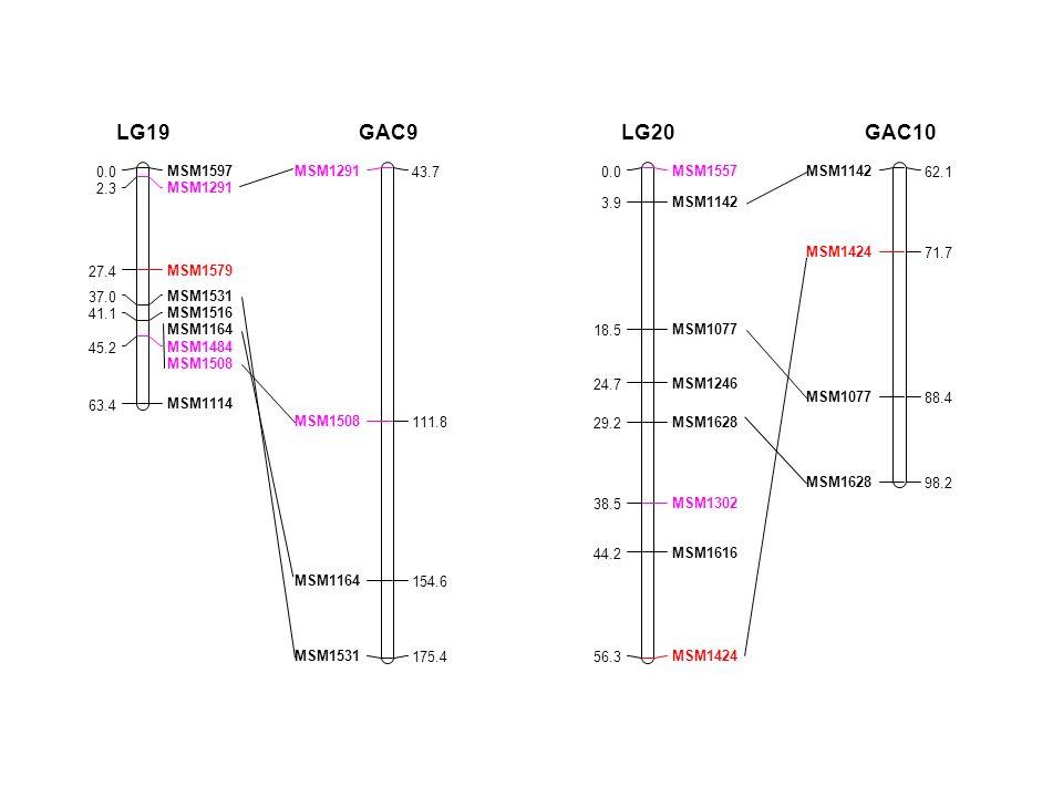 MSM1597 0.0 MSM1291 2.3 MSM1579 27.4 MSM1531 37.0 MSM1516 41.1 MSM1164 MSM1484 MSM1508 45.2 MSM1114 63.4 LG19 MSM1291 43.7 MSM1508 111.8 MSM1164 154.6 MSM1531 175.4 GAC9 MSM1557 0.0 MSM1142 3.9 MSM1077 18.5 MSM1246 24.7 MSM1628 29.2 MSM1302 38.5 MSM1616 44.2 MSM1424 56.3 LG20 MSM1142 62.1 MSM1424 71.7 MSM1077 88.4 MSM1628 98.2 GAC10