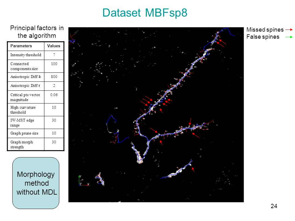 Dataset MBFsp8 Morphology method without MDL Missed spines False spines Principal factors in the algorithm ParametersValues Intensity threshold7 Conne