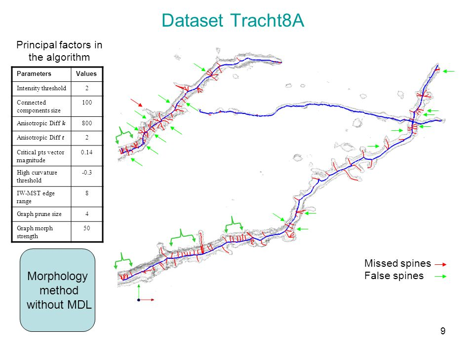 Dataset Tracht8A Morphology method without MDL Missed spines False spines Principal factors in the algorithm ParametersValues Intensity threshold2 Con