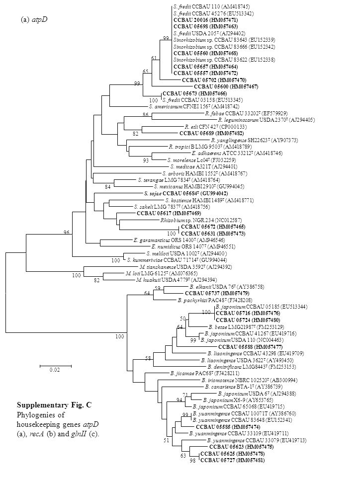 (a) atpD Supplementary Fig. C Phylogenies of housekeeping genes atpD (a), recA (b) and glnII (c).