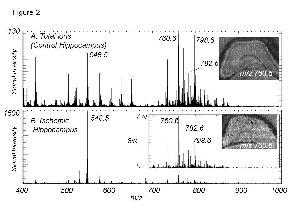 130 4005006007008009001000 1500 8x 170 548.5 760.6 798.6 782.6 Figure 2 548.5 A. Total ions (Control Hippocampus) B. Ischemic Hippocampus Signal Inten