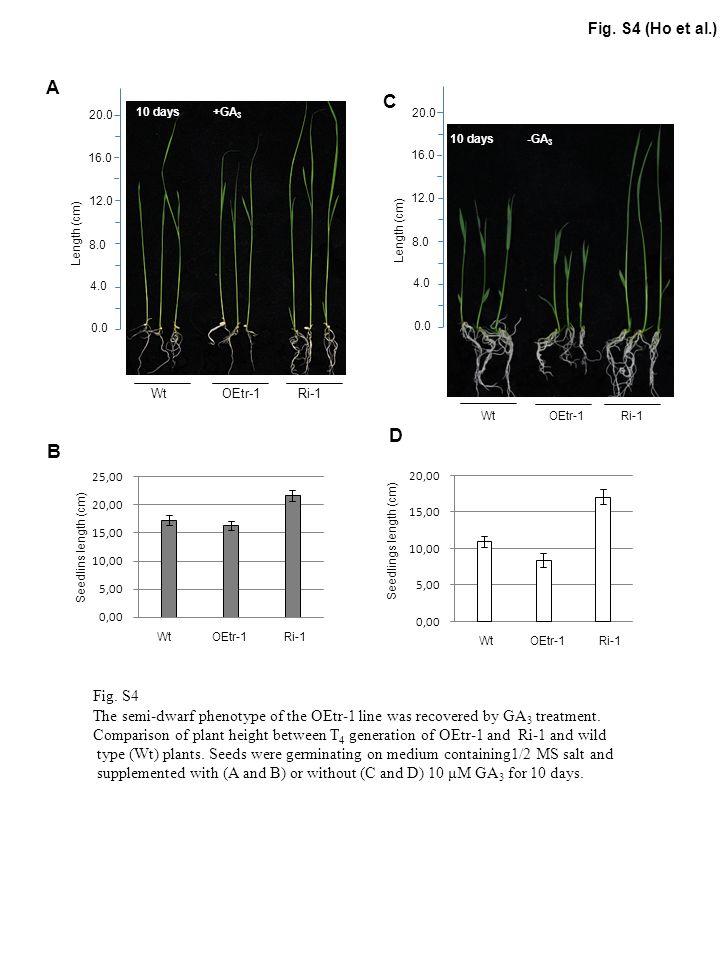 OsCDPK1 GA20ox1 GA20ox2 GA3ox2 Act1 Ri-1 OEtr-1 Wt Fig.