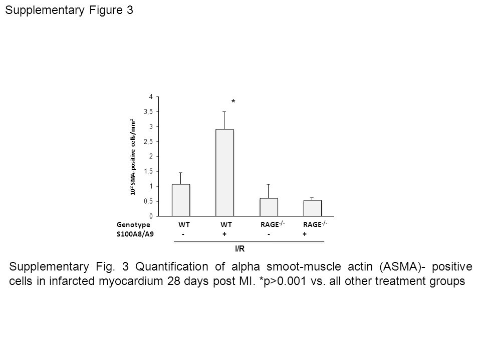 GenotypeWTWT RAGE -/- RAGE -/- S100A8/A9 - + - + I/R 10 2 SMA-positive cells/mm 2 Supplementary Figure 3 Supplementary Fig. 3 Quantification of alpha
