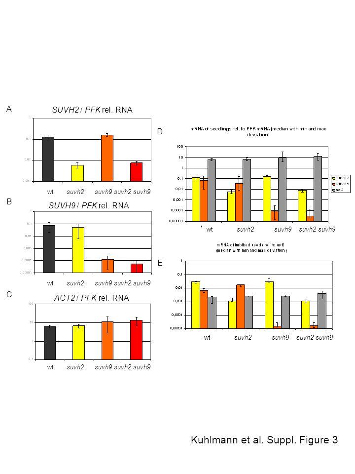 Kuhlmann et al. Suppl. Figure 3 SUVH2 / PFK rel. RNA SUVH9 / PFK rel. RNA ACT2 / PFK rel. RNA wt suvh2 suvh9 suvh2 suvh9 A B C D E