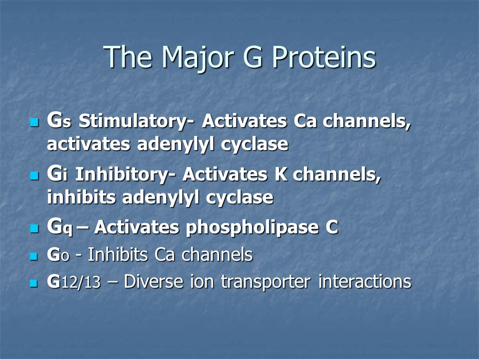 The Major G Proteins G s Stimulatory- Activates Ca channels, activates adenylyl cyclase G s Stimulatory- Activates Ca channels, activates adenylyl cyc