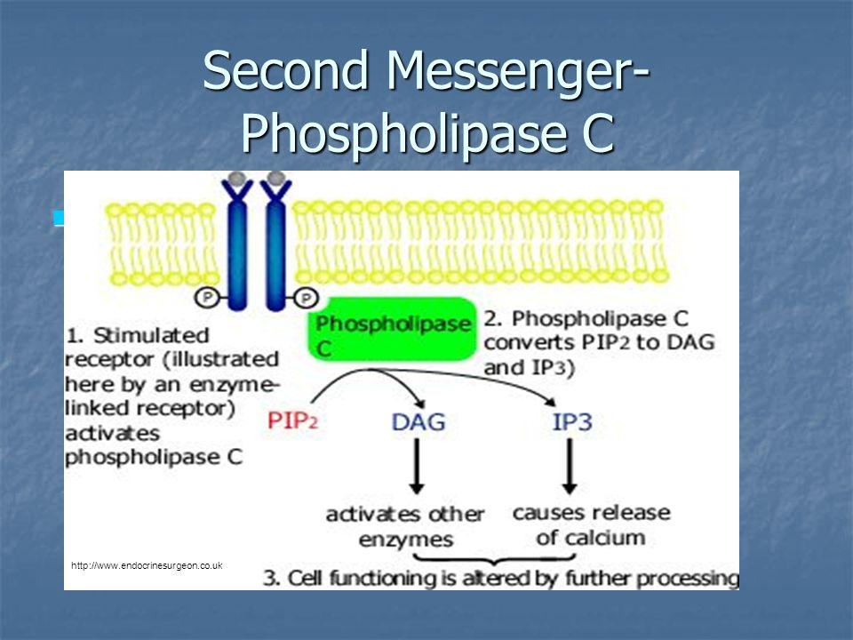 Second Messenger- Phospholipase C http://www.endocrinesurgeon.co.uk