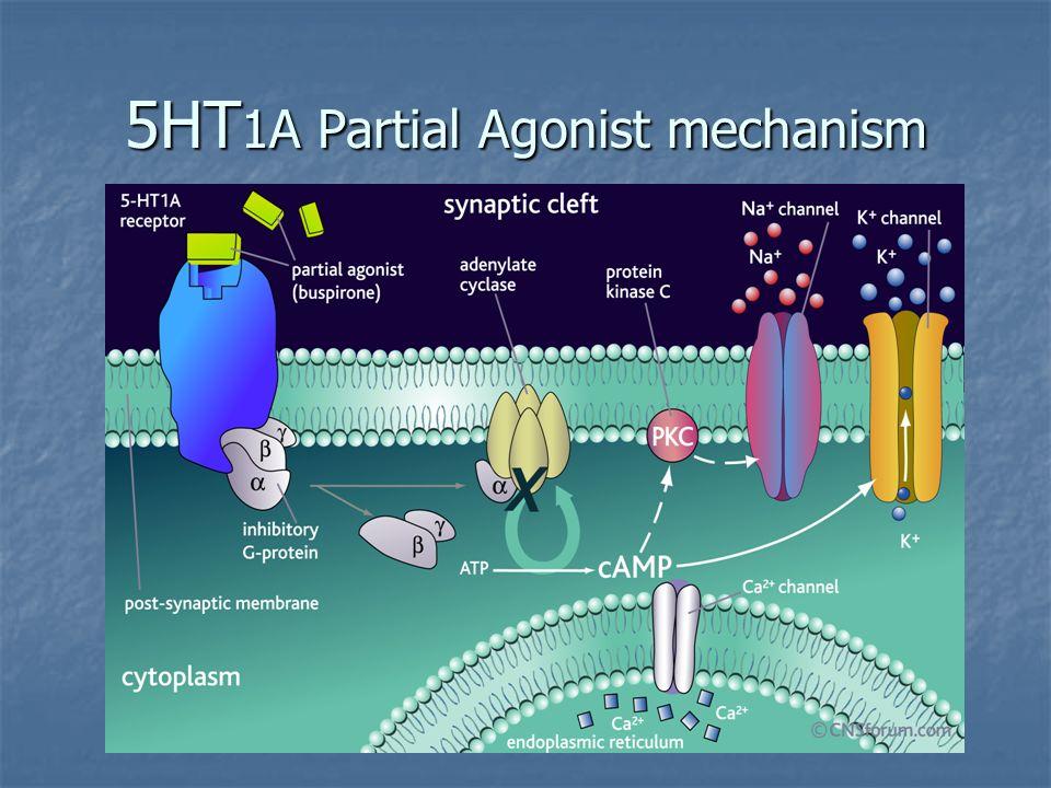 5HT 1A Partial Agonist mechanism