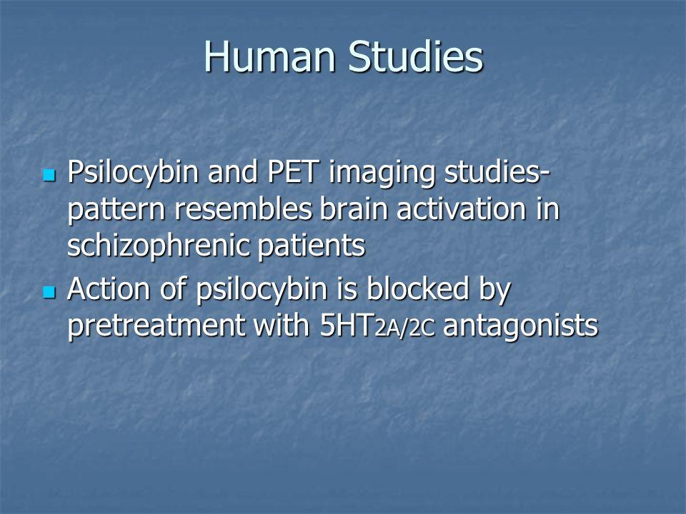 Human Studies Psilocybin and PET imaging studies- pattern resembles brain activation in schizophrenic patients Psilocybin and PET imaging studies- pat