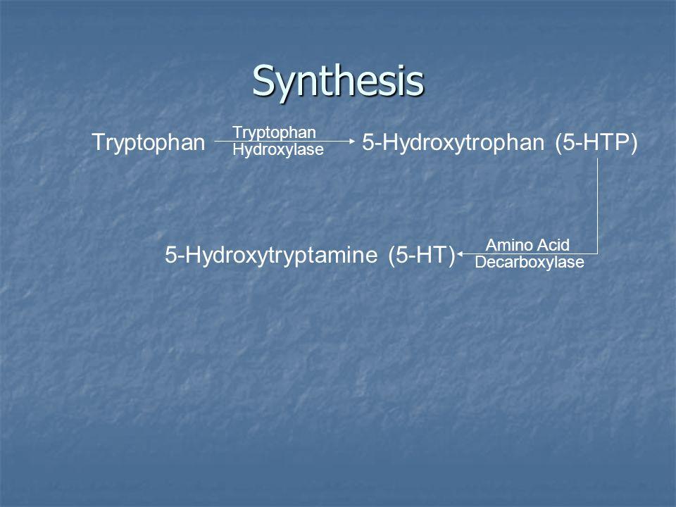 Synthesis Tryptophan Hydroxylase 5-Hydroxytrophan (5-HTP) Amino Acid Decarboxylase 5-Hydroxytryptamine (5-HT)