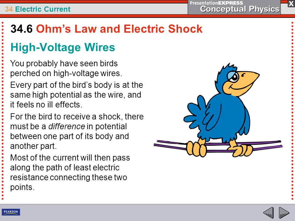 34 Electric Current High-Voltage Wires You probably have seen birds perched on high-voltage wires. Every part of the birds body is at the same high po