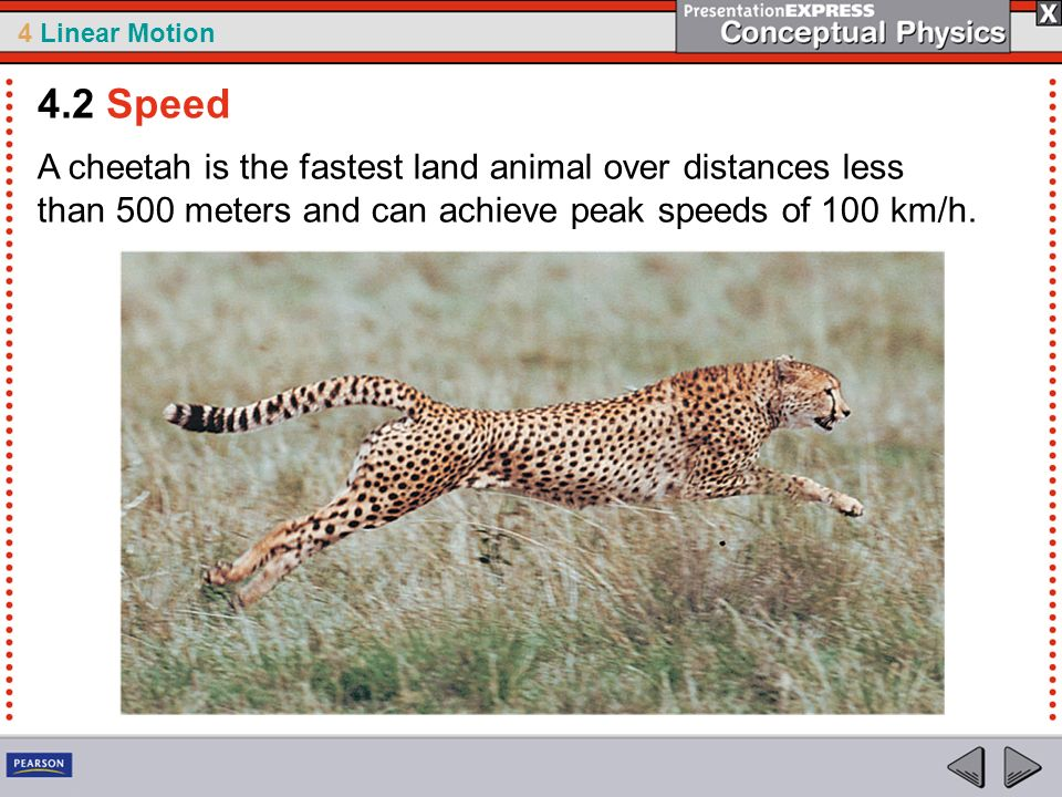 4 Linear Motion A cheetah is the fastest land animal over distances less than 500 meters and can achieve peak speeds of 100 km/h. 4.2 Speed