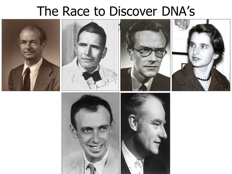 The Race to Discover DNAs Structure