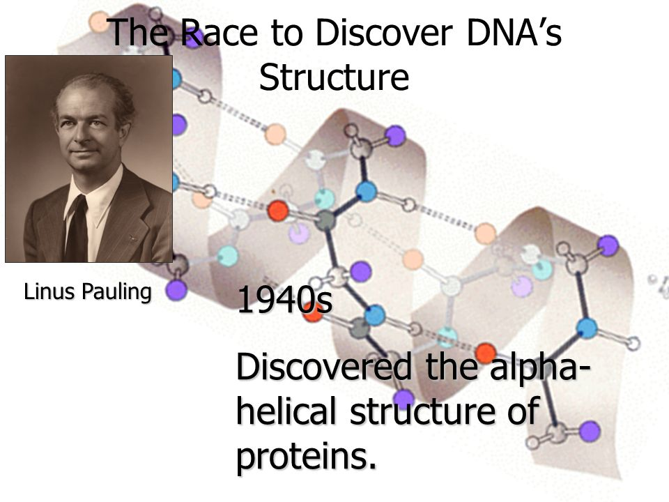 Linus Pauling 1940s Discovered the alpha- helical structure of proteins.