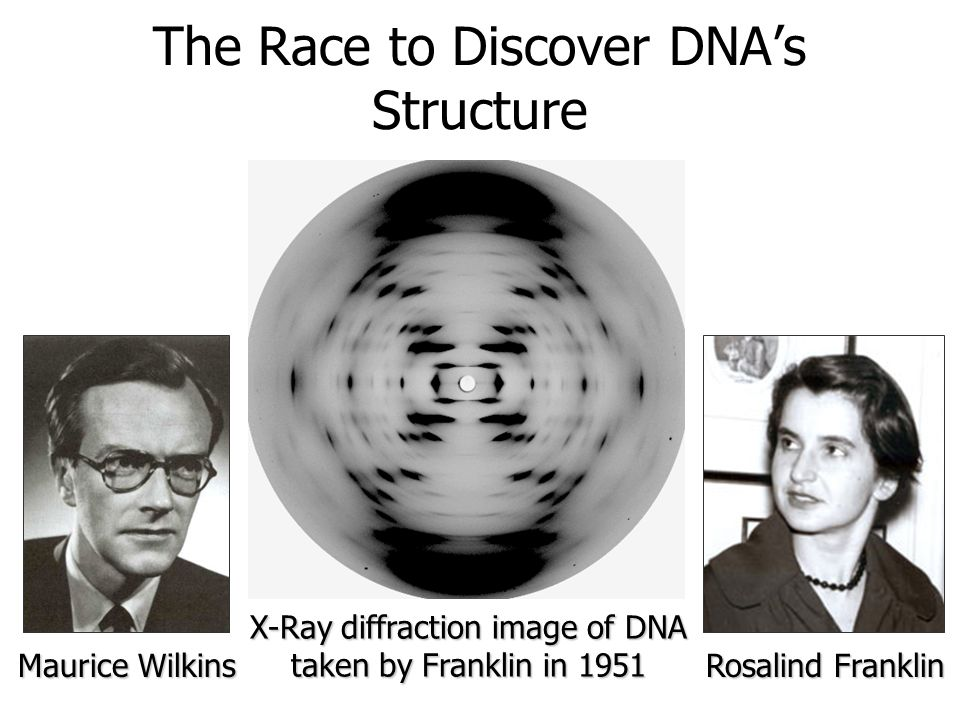 The Race to Discover DNAs Structure Maurice Wilkins Rosalind Franklin X-Ray diffraction image of DNA taken by Franklin in 1951