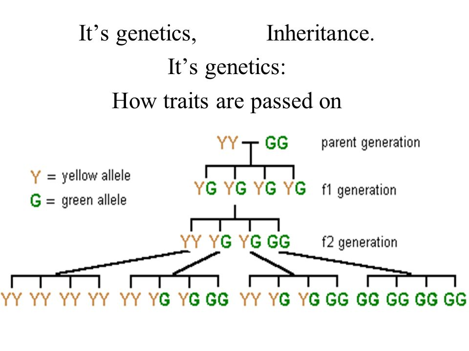 Its genetics,Inheritance. Its genetics: How traits are passed on