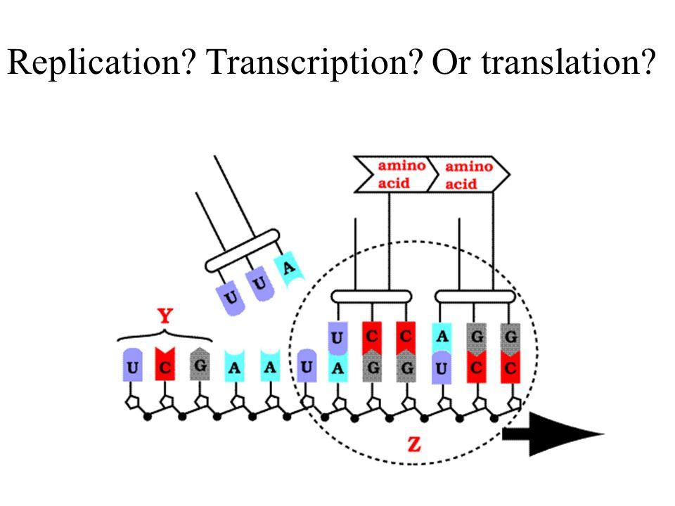 B? D? E? Amino acid tRNA mRNA codon anticodon C? A?