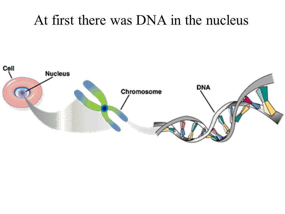 At first there was DNA in the nucleus