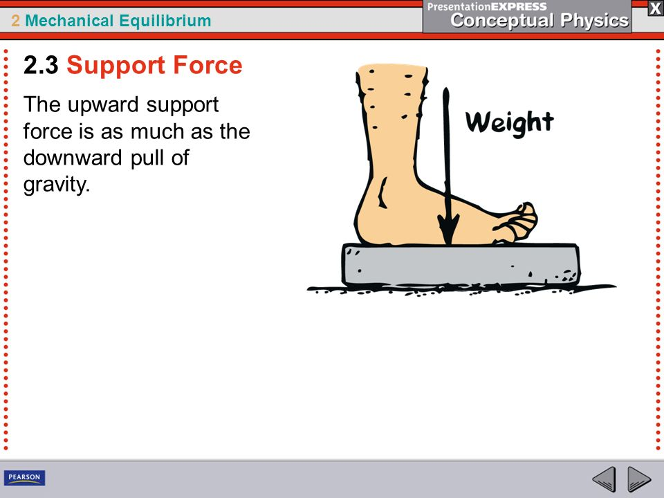 2 Mechanical Equilibrium The upward support force is as much as the downward pull of gravity. 2.3 Support Force