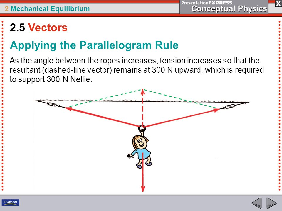 2 Mechanical Equilibrium As the angle between the ropes increases, tension increases so that the resultant (dashed-line vector) remains at 300 N upwar