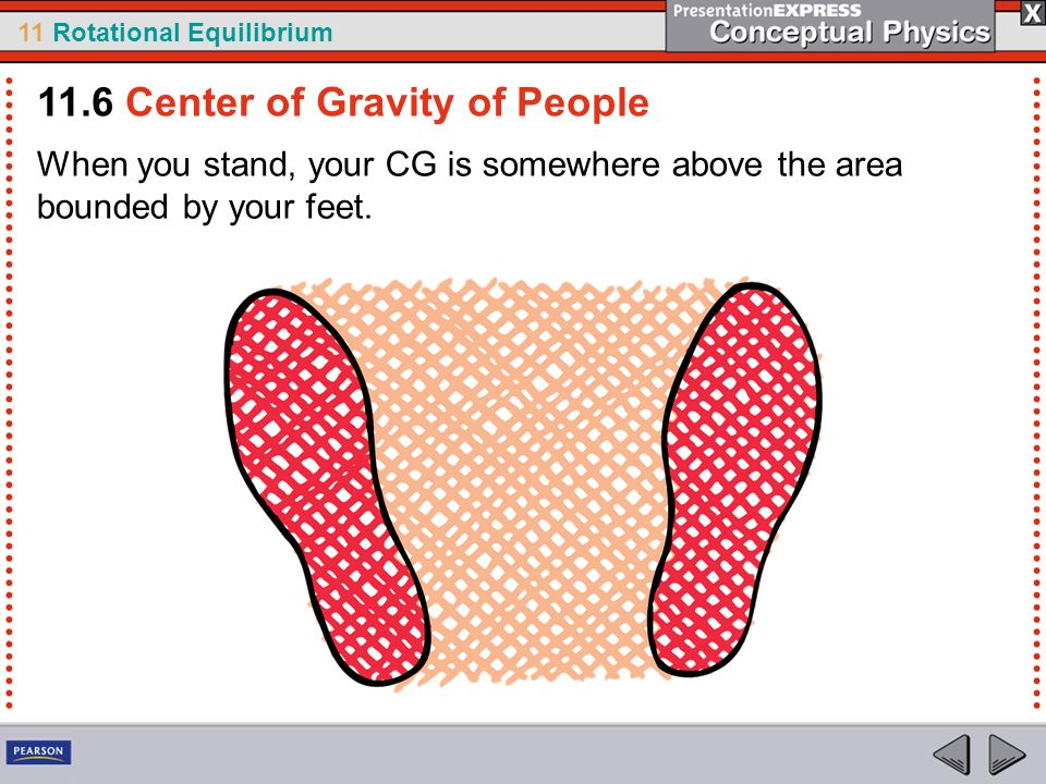11 Rotational Equilibrium When you stand, your CG is somewhere above the area bounded by your feet. 11.6 Center of Gravity of People