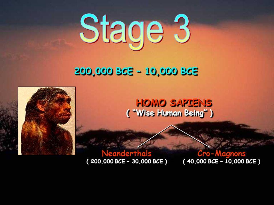 200,000 BCE – 10,000 BCE HOMO SAPIENS ( Wise Human Being ) Neanderthals ( 200,000 BCE – 30,000 BCE ) Cro-Magnons ( 40,000 BCE – 10,000 BCE )