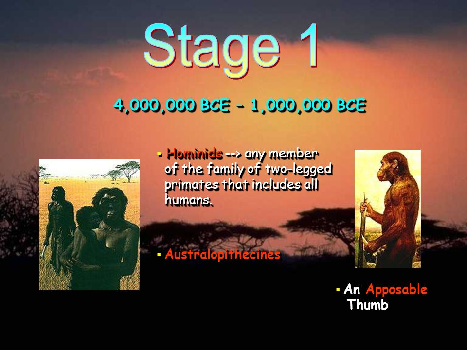 4,000,000 BCE – 1,000,000 BCE Hominids --> any member of the family of two-legged primates that includes all humans. Australopithecines An Apposable T