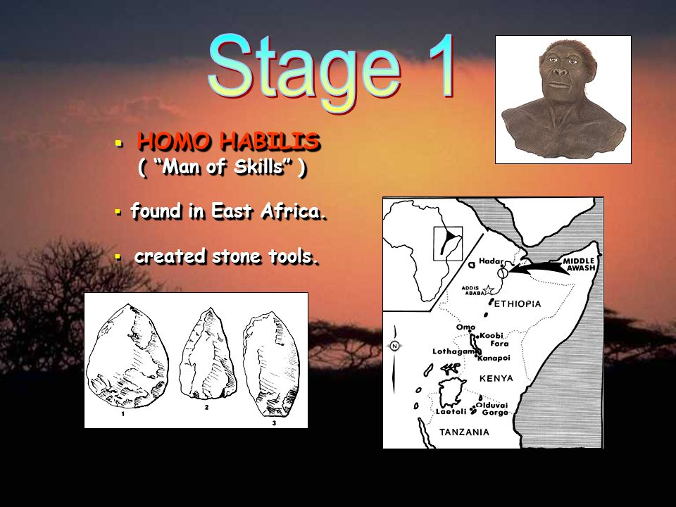 HOMO HABILIS ( Man of Skills ) HOMO HABILIS ( Man of Skills ) found in East Africa. created stone tools.