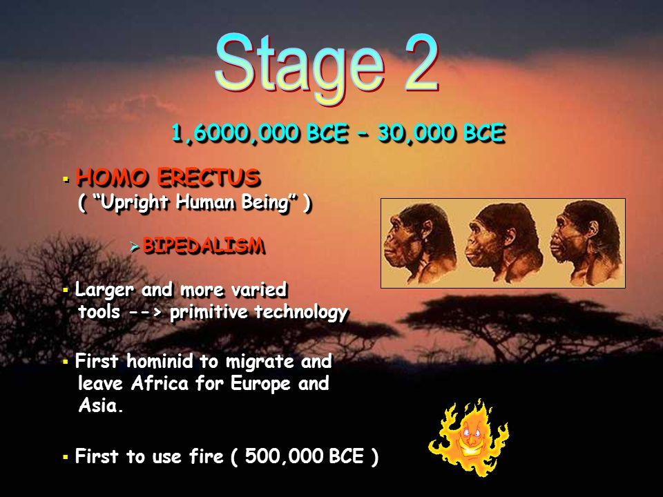 1,6000,000 BCE – 30,000 BCE HOMO ERECTUS ( Upright Human Being ) Larger and more varied tools --> primitive technology First hominid to migrate and le