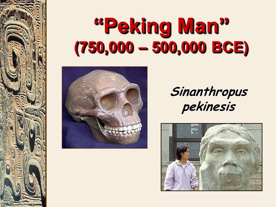 Peking Man (750,000 – 500,000 BCE) Sinanthropus pekinesis