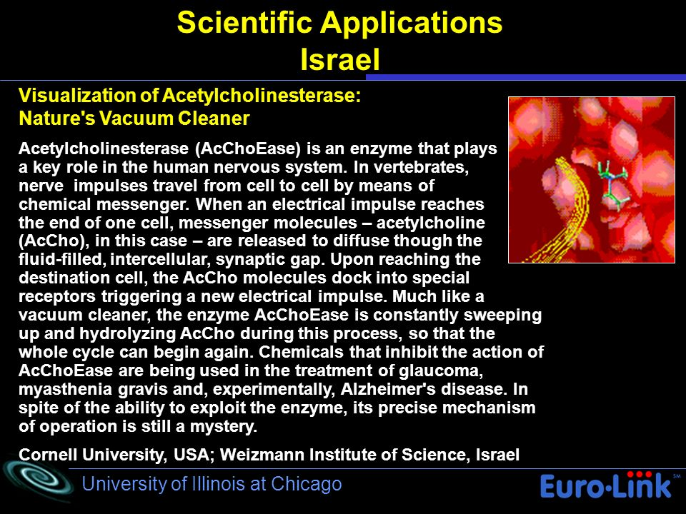 University of Illinois at Chicago Scientific Applications Israel Visualization of Acetylcholinesterase: Nature s Vacuum Cleaner Acetylcholinesterase (AcChoEase) is an enzyme that plays a key role in the human nervous system.