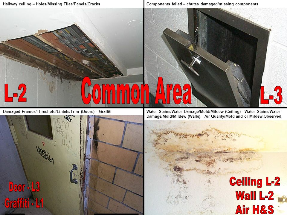 Water Stains/Water Damage/Mold/Mildew (Ceiling) - Water Stains/Water Damage/Mold/Mildew (Walls) - Air Quality/Mold and or Mildew Observed Components f