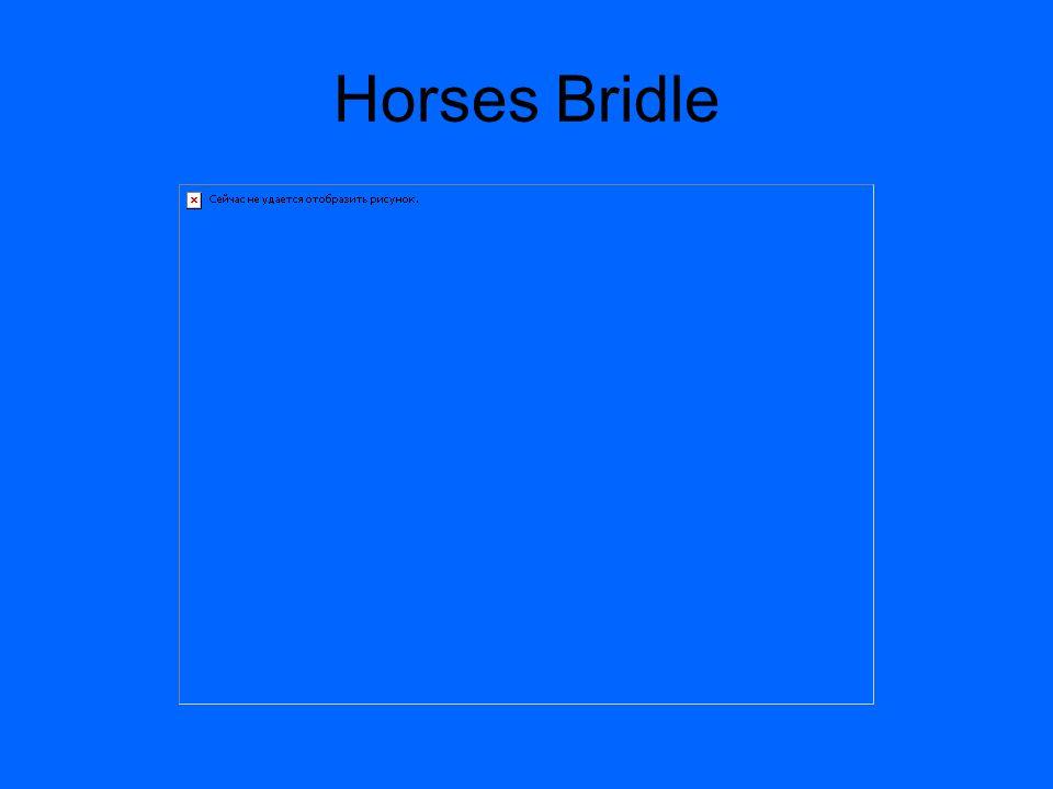 Horses Bridle