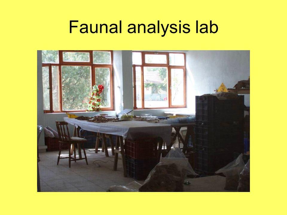 Faunal analysis lab