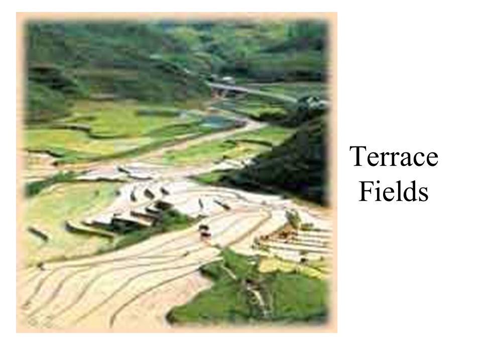 Terrace Fields