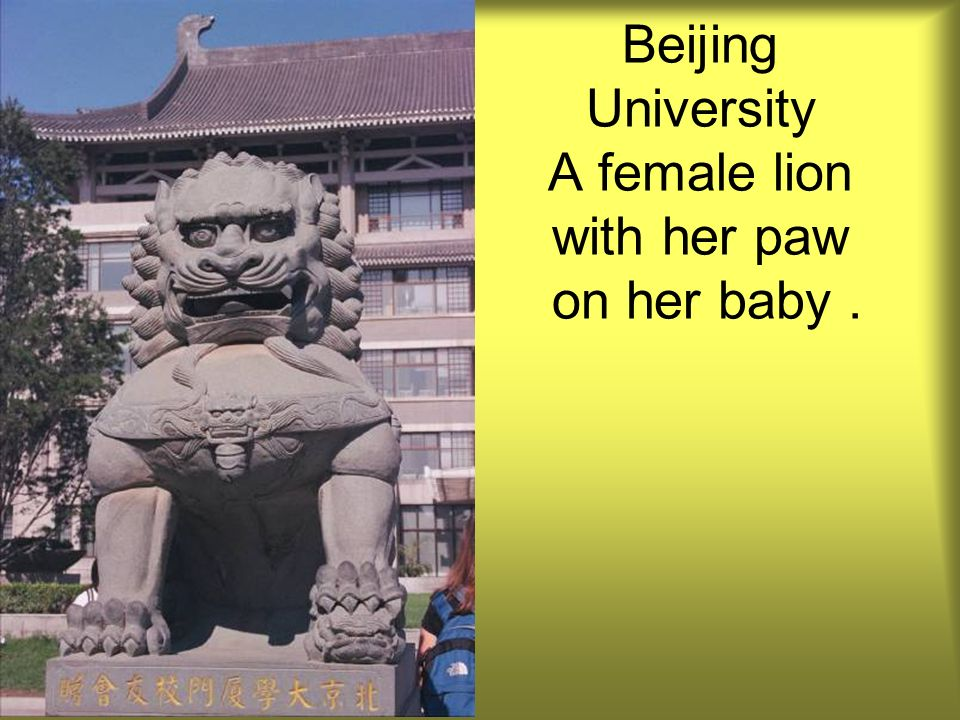 Beijing University A female lion with her paw on her baby.