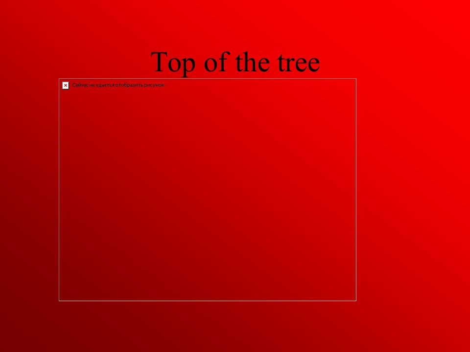 Top of the tree