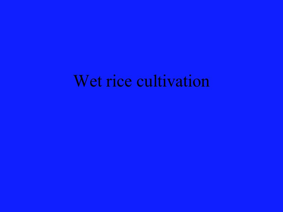 Wet rice cultivation