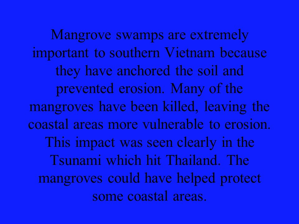 Mangrove swamps are extremely important to southern Vietnam because they have anchored the soil and prevented erosion.