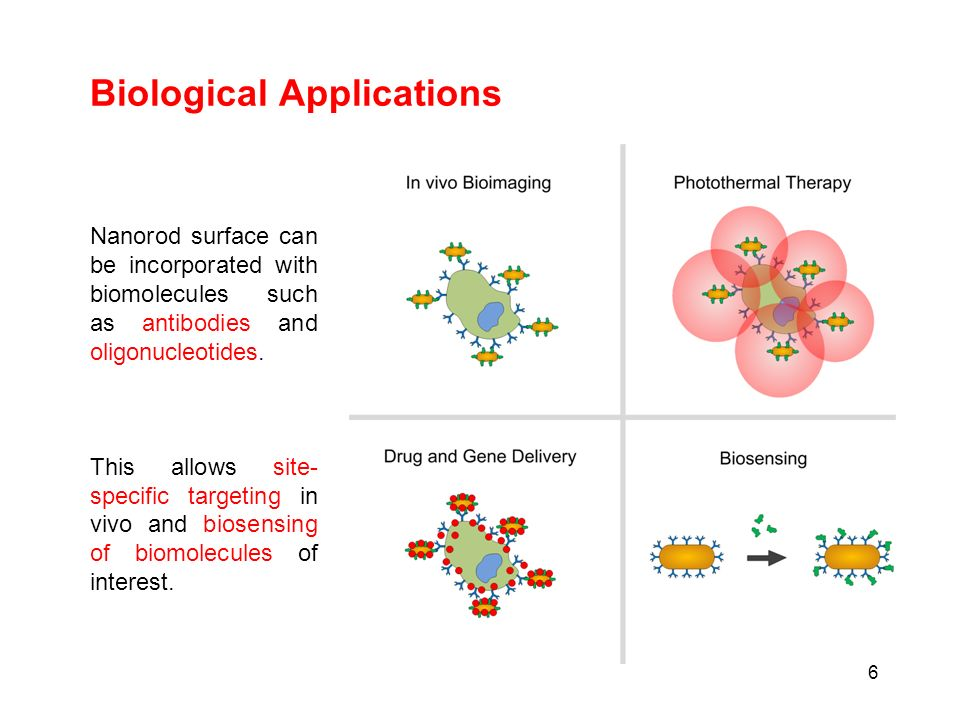 Biological Applications 6 Nanorod surface can be incorporated with biomolecules such as antibodies and oligonucleotides. This allows site- specific ta