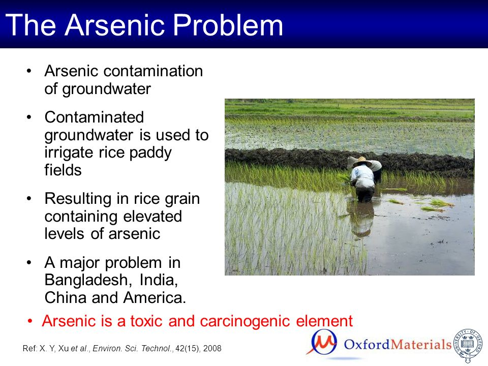 The Arsenic Problem Arsenic contamination of groundwater Contaminated groundwater is used to irrigate rice paddy fields Resulting in rice grain contai