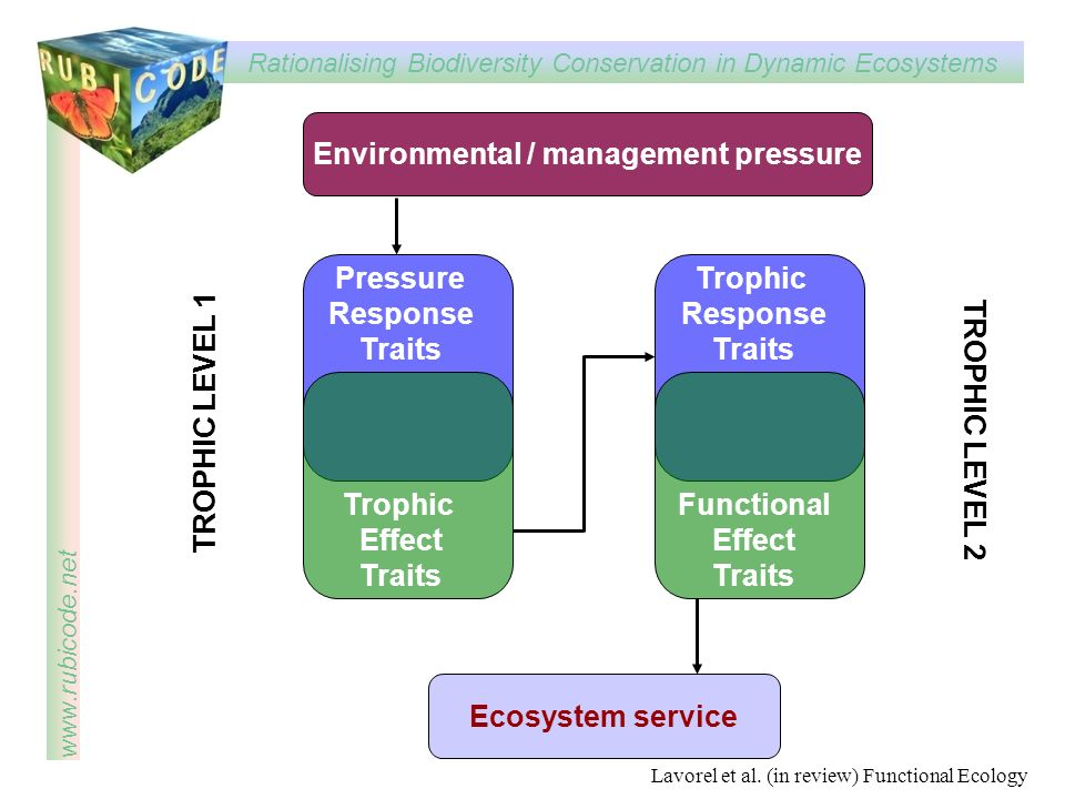 Rationalising Biodiversity Conservation in Dynamic Ecosystems www.rubicode.net Pressure Response Traits Trophic Effect Traits Trophic Response Traits