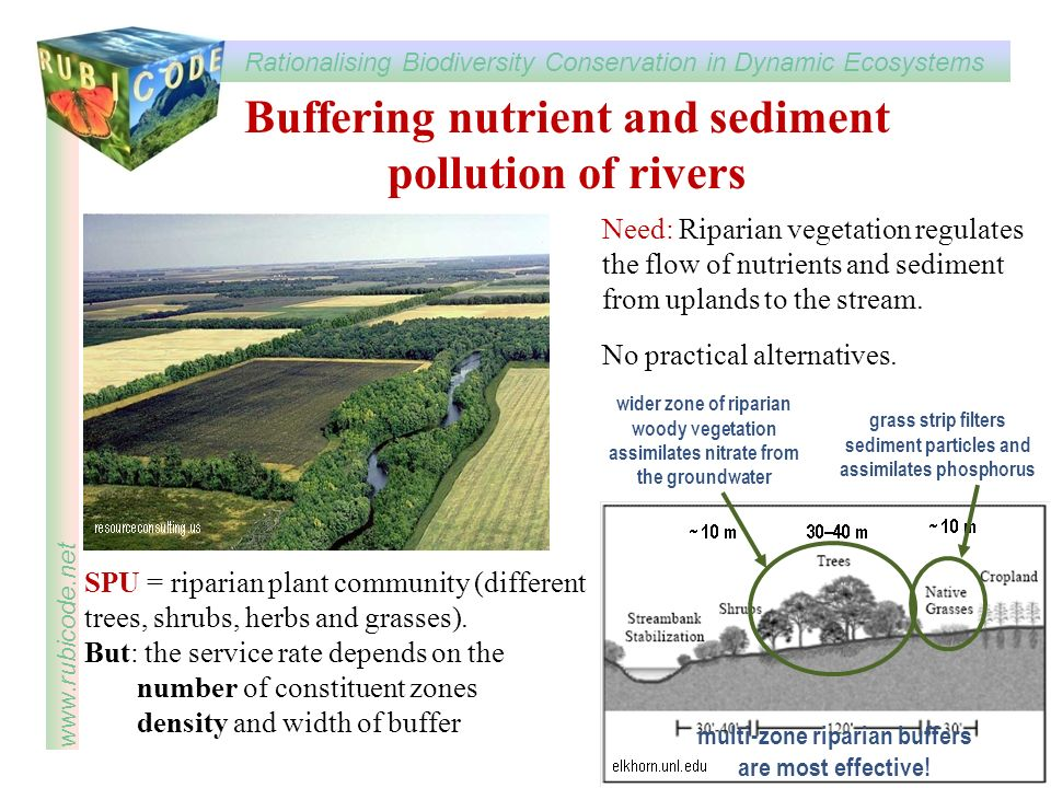 Rationalising Biodiversity Conservation in Dynamic Ecosystems www.rubicode.net Buffering nutrient and sediment pollution of rivers ctmsu.sytes.net SPU