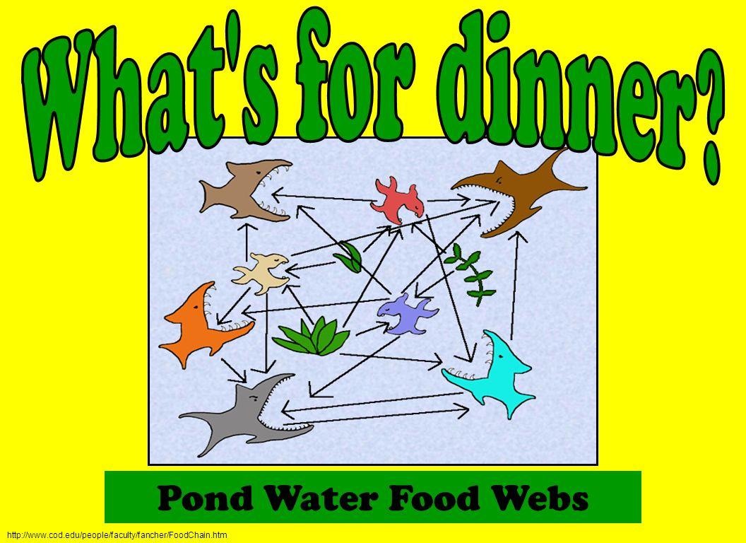 Pond Water Food Webs http://www.cod.edu/people/faculty/fancher/FoodChain.htm
