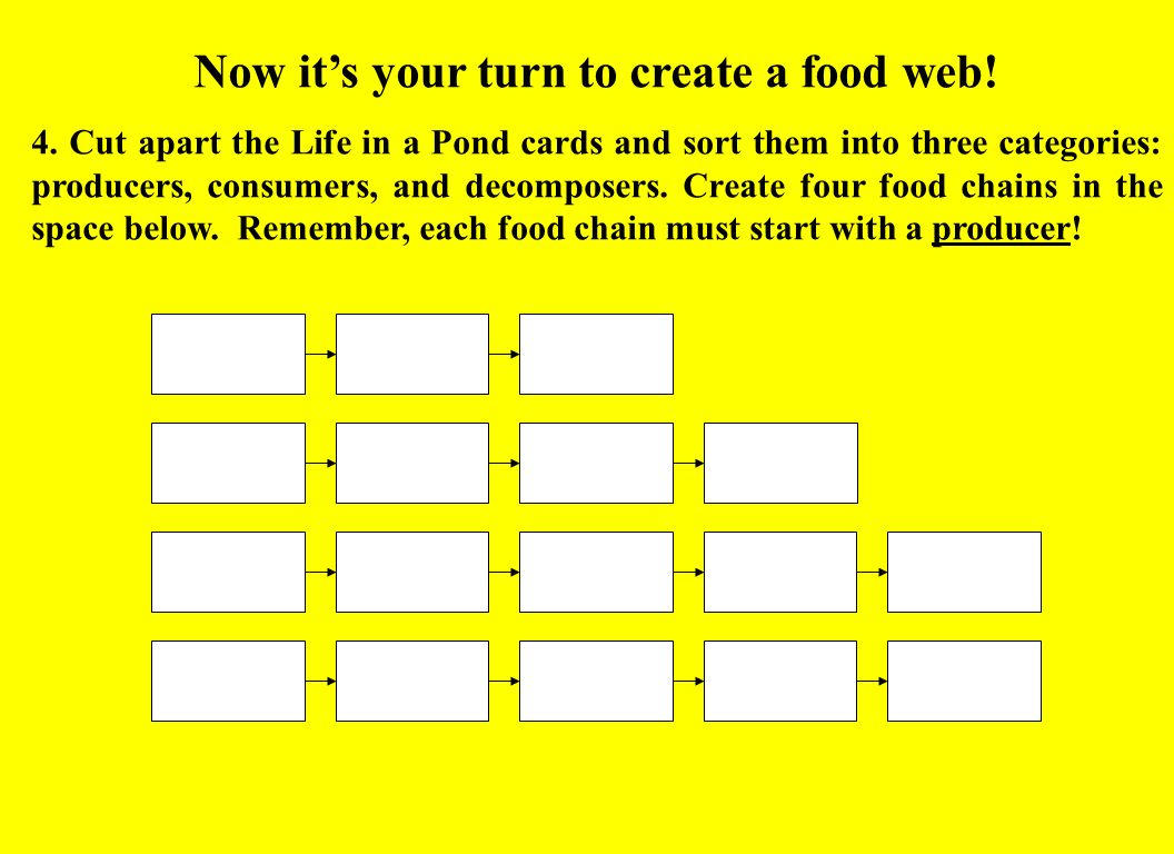 Now its your turn to create a food web! 4. Cut apart the Life in a Pond cards and sort them into three categories: producers, consumers, and decompose